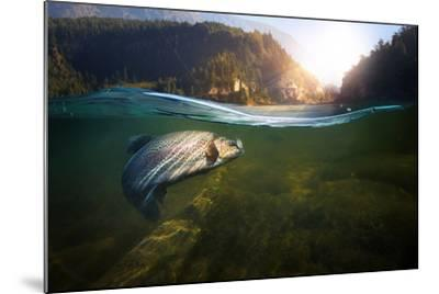 Fishing. Close-Up Shut of a Fish Hook under Water- Rocksweeper-Mounted Photographic Print