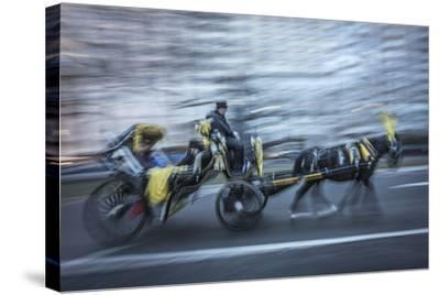 Horse 2-Moises Levy-Stretched Canvas Print