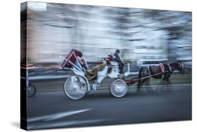 Motion Horse 3-Moises Levy-Stretched Canvas Print