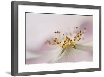 Wild Rose II-Heidi Westum-Framed Photographic Print