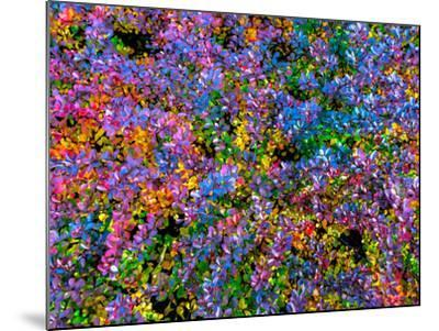 Barberry-Steven Maxx-Mounted Photographic Print