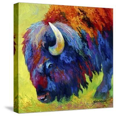 Bison Portrait II-Marion Rose-Stretched Canvas Print