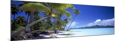 0130 Tropical Paradise-Doug Cavanah-Mounted Giclee Print