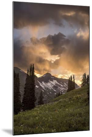 Mountain Evergreens-Dan Ballard-Mounted Photographic Print
