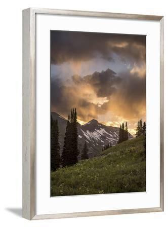 Mountain Evergreens-Dan Ballard-Framed Photographic Print