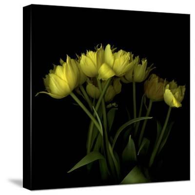 Yellow Tulips 1-Magda Indigo-Stretched Canvas Print