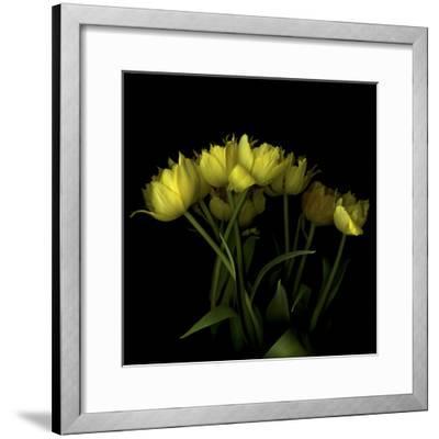 Yellow Tulips 1-Magda Indigo-Framed Photographic Print