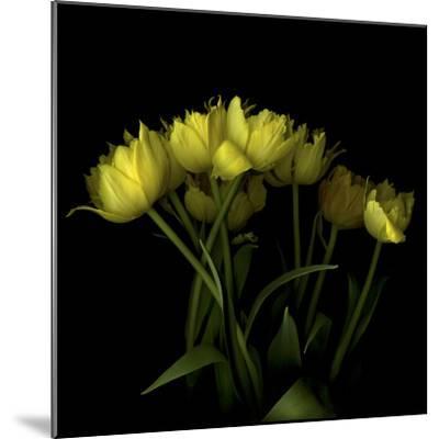 Yellow Tulips 1-Magda Indigo-Mounted Photographic Print