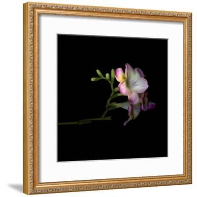 Freesia 6-Magda Indigo-Framed Photographic Print