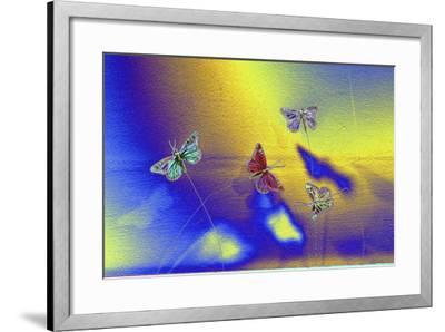 DSC1234-Tom Kelly-Framed Photographic Print