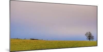 286-Dan Ballard-Mounted Photographic Print
