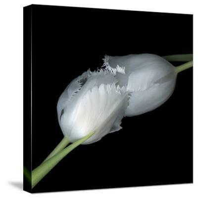 A Kiss To Build A Dream On - Tulips-Magda Indigo-Stretched Canvas Print