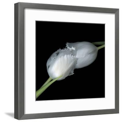 A Kiss To Build A Dream On - Tulips-Magda Indigo-Framed Photographic Print