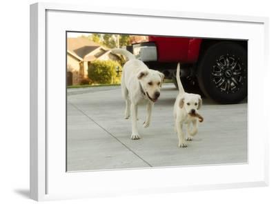 THPpuppy-E6J0046c-Tanya Hovey-Framed Photographic Print