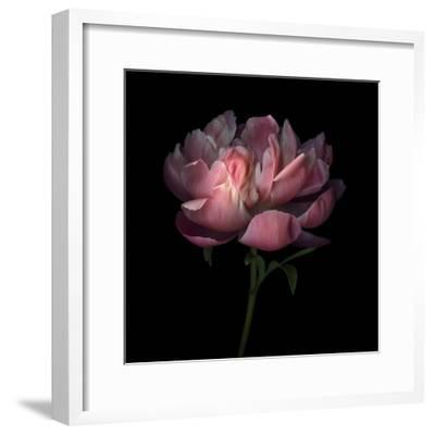 Peony 1-Magda Indigo-Framed Photographic Print