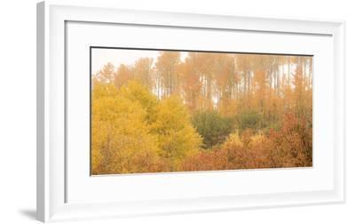 308-Dan Ballard-Framed Photographic Print