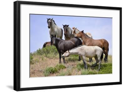 Mustangs of the Badlands-1440-Gordon Semmens-Framed Photographic Print