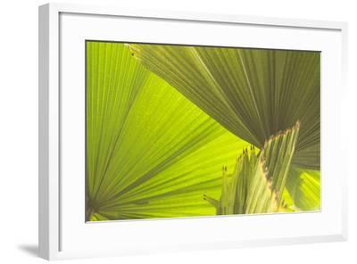 DSC0155-Tom Kelly-Framed Photographic Print