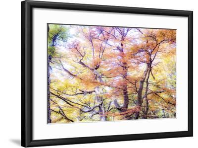 363-Dan Ballard-Framed Photographic Print