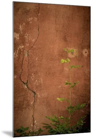 366-Dan Ballard-Mounted Photographic Print