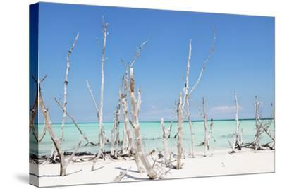 Cuba Fuerte Collection - Ocean Wild Nature-Philippe Hugonnard-Stretched Canvas Print