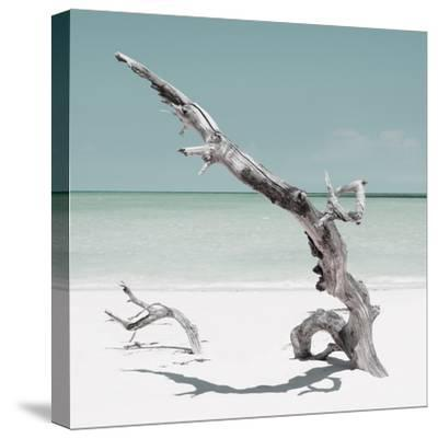 Cuba Fuerte Collection SQ - Solitary Tree - Pastel Aquamarine-Philippe Hugonnard-Stretched Canvas Print