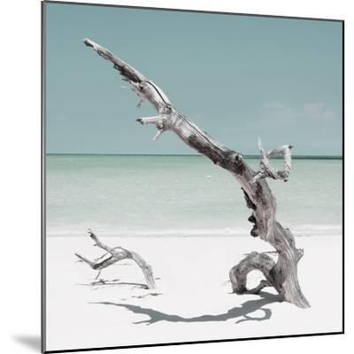 Cuba Fuerte Collection SQ - Solitary Tree - Pastel Aquamarine-Philippe Hugonnard-Mounted Photographic Print