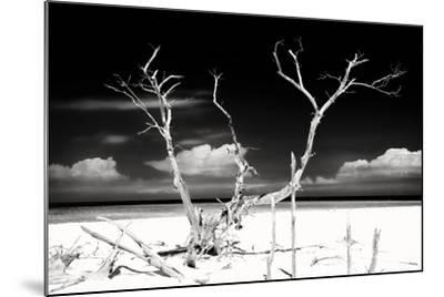 Cuba Fuerte Collection B&W - Trees and White Sand II-Philippe Hugonnard-Mounted Photographic Print