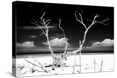 Cuba Fuerte Collection B&W - Trees and White Sand II-Philippe Hugonnard-Stretched Canvas Print