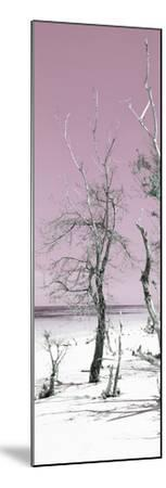 Cuba Fuerte Collection Panoramic - Pale Violet Summer-Philippe Hugonnard-Mounted Photographic Print