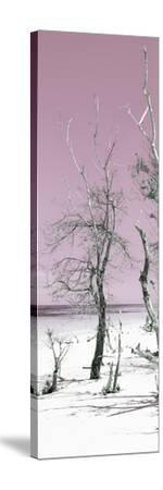 Cuba Fuerte Collection Panoramic - Pale Violet Summer-Philippe Hugonnard-Stretched Canvas Print