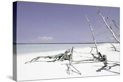 Cuba Fuerte Collection - Wild Purple Lagoon-Philippe Hugonnard-Stretched Canvas Print