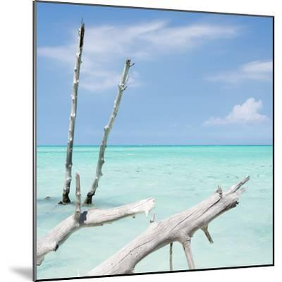 Cuba Fuerte Collection SQ - White Trees II-Philippe Hugonnard-Mounted Photographic Print
