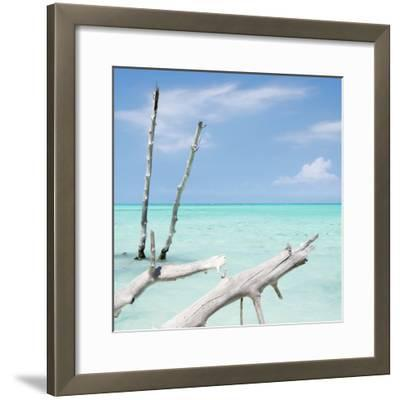 Cuba Fuerte Collection SQ - White Trees II-Philippe Hugonnard-Framed Photographic Print