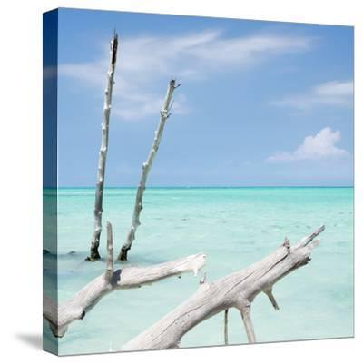 Cuba Fuerte Collection SQ - White Trees II-Philippe Hugonnard-Stretched Canvas Print