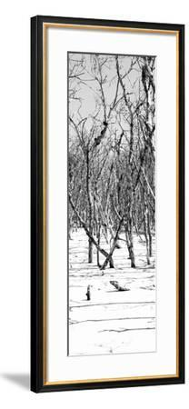 Cuba Fuerte Collection Panoramic BW - White Forest-Philippe Hugonnard-Framed Photographic Print