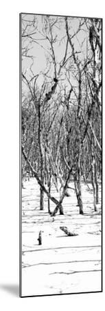 Cuba Fuerte Collection Panoramic BW - White Forest-Philippe Hugonnard-Mounted Photographic Print