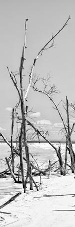 Cuba Fuerte Collection Panoramic BW - Tropical Wild Beach II-Philippe Hugonnard-Framed Photographic Print