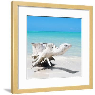 Cuba Fuerte Collection SQ - Wooden Turtle on the Beach-Philippe Hugonnard-Framed Photographic Print