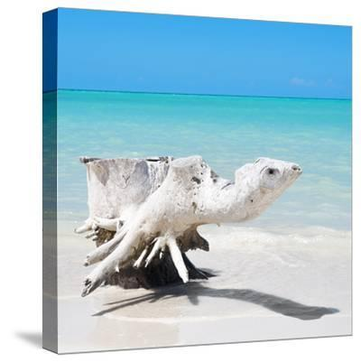 Cuba Fuerte Collection SQ - Wooden Turtle on the Beach-Philippe Hugonnard-Stretched Canvas Print
