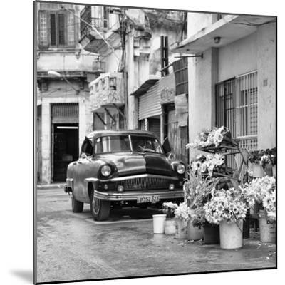 Cuba Fuerte Collection SQ BW - Sunflowers-Philippe Hugonnard-Mounted Photographic Print