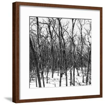 Cuba Fuerte Collection SQ BW - White Forest III-Philippe Hugonnard-Framed Photographic Print