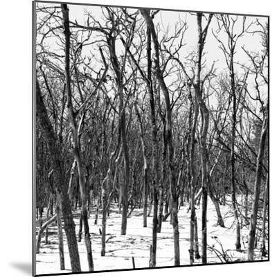 Cuba Fuerte Collection SQ BW - White Forest III-Philippe Hugonnard-Mounted Photographic Print