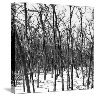 Cuba Fuerte Collection SQ BW - White Forest III-Philippe Hugonnard-Stretched Canvas Print