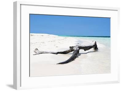 Cuba Fuerte Collection - Black Tree on the Beach-Philippe Hugonnard-Framed Photographic Print