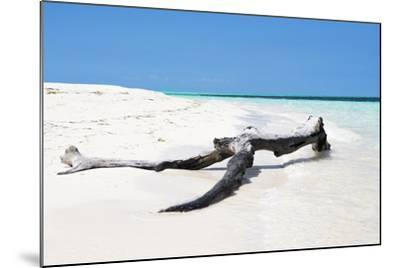 Cuba Fuerte Collection - Black Tree on the Beach-Philippe Hugonnard-Mounted Photographic Print