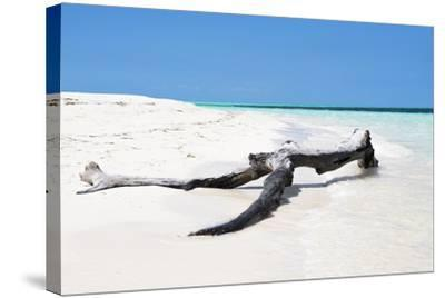 Cuba Fuerte Collection - Black Tree on the Beach-Philippe Hugonnard-Stretched Canvas Print