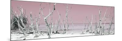 Cuba Fuerte Collection Panoramic - Wild Beach - Pastel Red-Philippe Hugonnard-Mounted Photographic Print