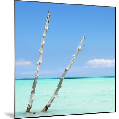 Cuba Fuerte Collection SQ - Aquatic Tree-Philippe Hugonnard-Mounted Photographic Print