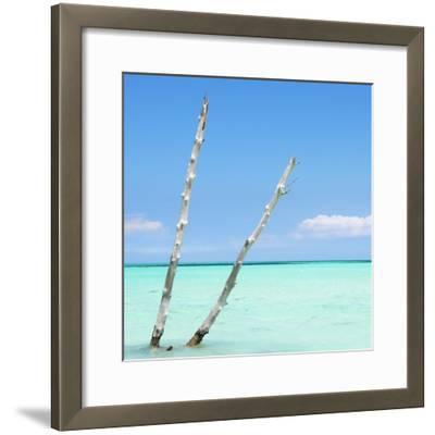 Cuba Fuerte Collection SQ - Aquatic Tree-Philippe Hugonnard-Framed Photographic Print